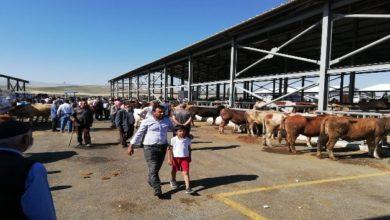 Photo of Horasan'da Kurban pazarlığında 'sopalı' dönem