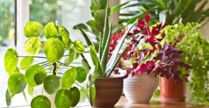 Çiçeklerinizi Sağlıklı Büyütmenin Sırrı