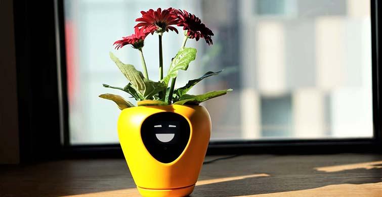 Çiçeklerin Konuşturan İlginç Tasarım