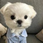 womannnn kullanıcısının profil fotoğrafı